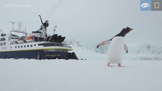 Cross-country Skiing | Antarctica | Lindblad Expeditions-National Geographic