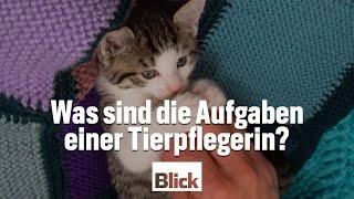 Was sind die Aufgaben eines Tierpflegers? | BLICK