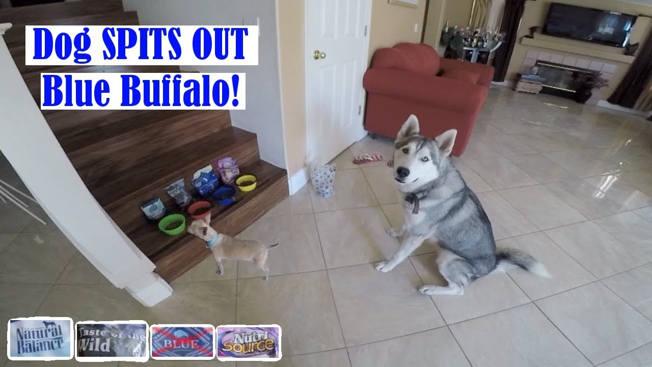 Best Dog Food Brand For Dogs Harness Training My Cockatiel Pt1
