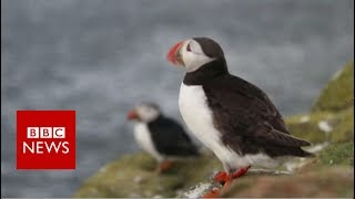 The life of a ranger on the remote Farne Islands - BBC News