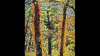 Leo Abrahams Honeytrap - Autumn