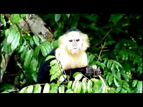 GAMBOA  RAINFOREST RESORT, Panama Canal, see monkeys/fishing