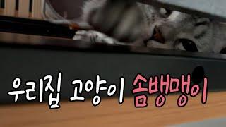 벙커 침대 사면 좋은 이유 딱 한 가지 고양이 구경