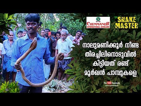 Vava Suresh catches two Cobras after 4-hr-long search | Snakemaster | EP 425 | Kaumudy TV