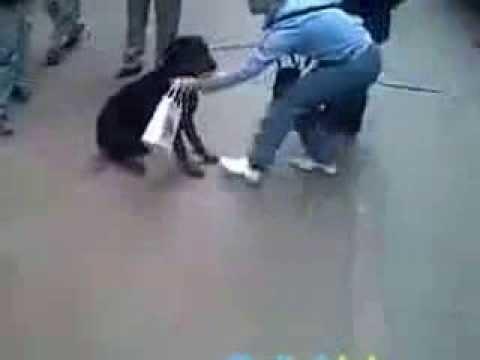 Sosyetenin Rotweiller köpeğini madara eden diyarbakırlı kedi :))