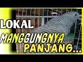 Perkutut Lokal Gacor Manggung Cocok Untuk Pikatan Perkutut Malas Bunyi  Mp3 - Mp4 Download