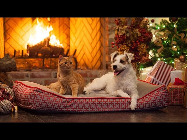 Special A Very Happy Yule Log Hallmark Movies Mysteries Youtube