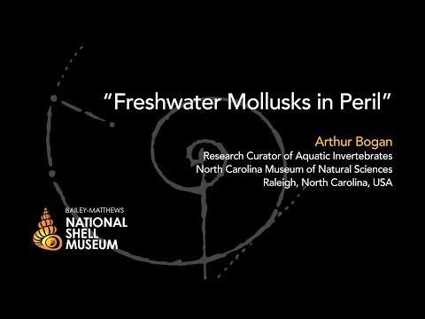 Mollusks in Peril — Freshwater Mollusks in Peril