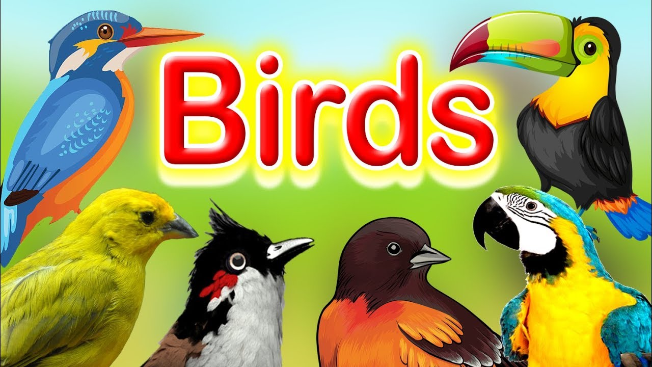 Birds Name And their sounds | Learn about birds | Different types of Birds  | Kids Learning Center