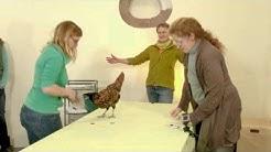 Clickertraining mit Hühnern - Viviane Theby