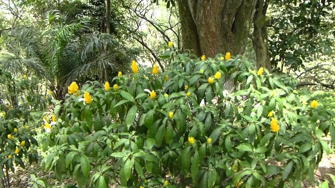 #5756, Pequeñas Flores Amarillas De Un Arbusto [Raw