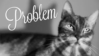 Ariana Grande - Problem (Cat Version)