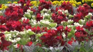 Для оформления Казани в этом году было выращено 4 млн. цветов(В рамках акции «Цветущая Казань» общая площадь посадки цветов на 36 улицах города, а также в скверах и парках..., 2014-08-04T09:44:11.000Z)