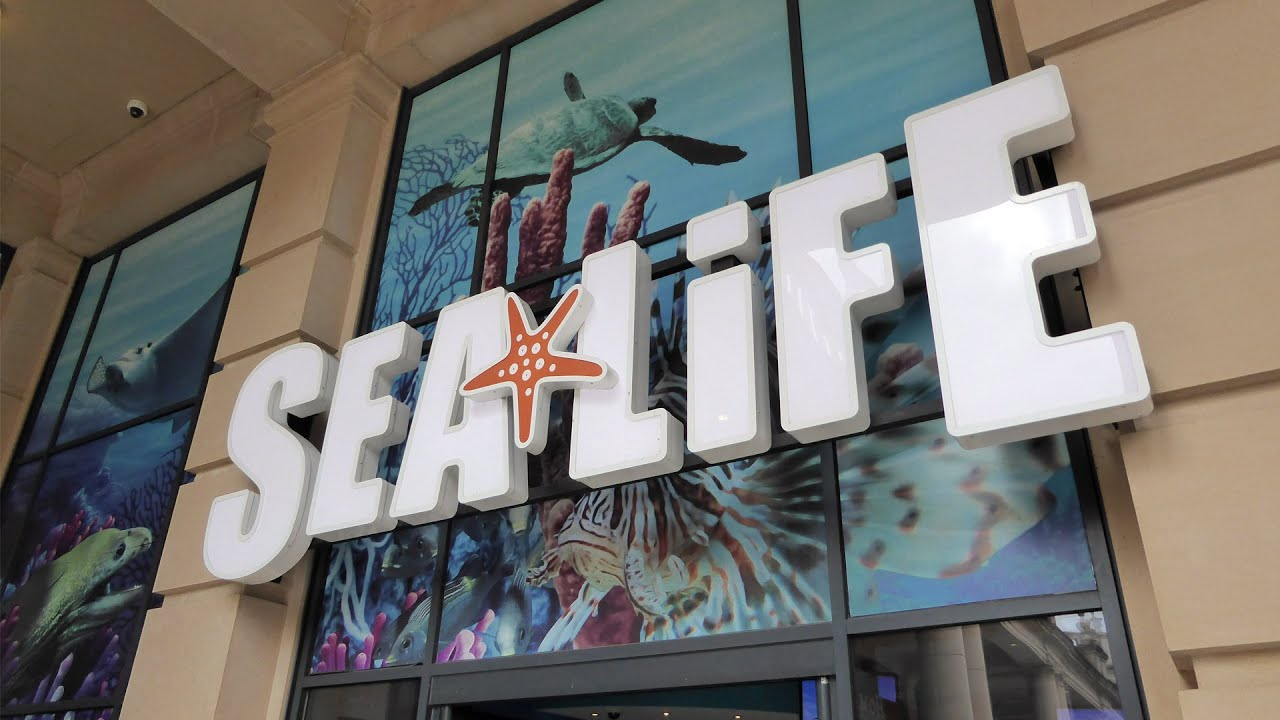 Sea Life Centre Manchester - Full Tour - YouTube