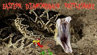 Eastern Diamondback Rattlesnake :  [KRiSTA