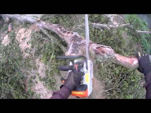ISA Certified Arborist - Nick Gosnell Tree Service in Santa Barbara, CA Phone: 805-570-9876