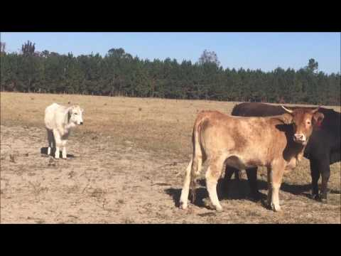 How The Cattle Industry Contributes To Global Warming