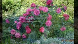 Сад своими руками.Многолетние растения в саду,сезон 2015. Слайд-шоу из фото