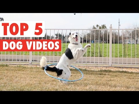 Best of the Week Dogs    Funny Puppy Compilation: March 18 2016