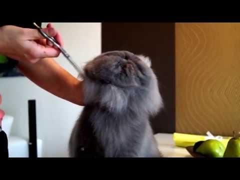 Grooming Video ..head Trimming