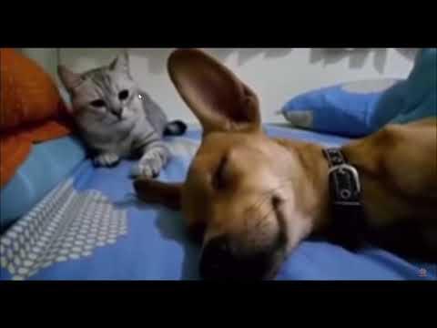 屁をこいた犬にマジ切れする猫、猫の嗅覚は人の数万倍~数十万倍