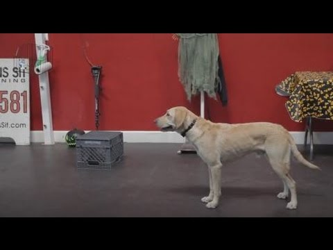 how to train your dog to stand