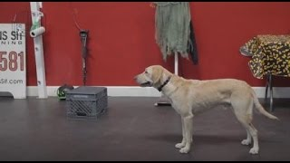 Train Your Dog To Stand On Command | Dog Training - Command Stand | Sitmeanssit.com