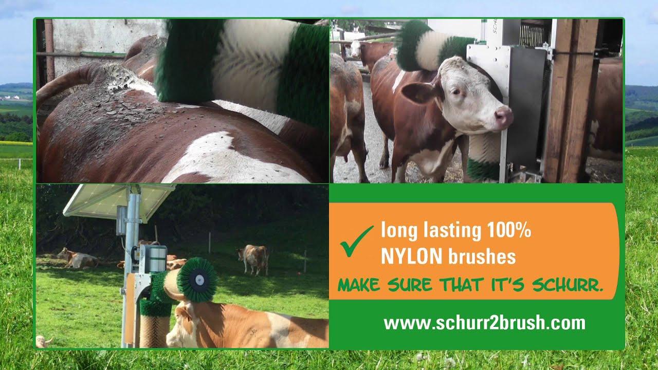 SCHURR 2-brush-system for milking cows cow-brush cow brush
