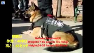 世界のトップ10ガード犬.