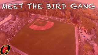 Episode 28 of Meet the Bird Gang: End of Summer