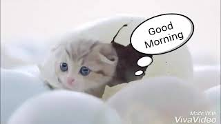 Good Morning With Cute Cats