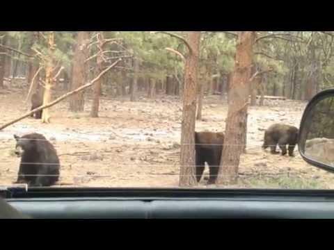 Part 2 | Ride Along through Bearizona Wildlife Park in Williams, Arizona