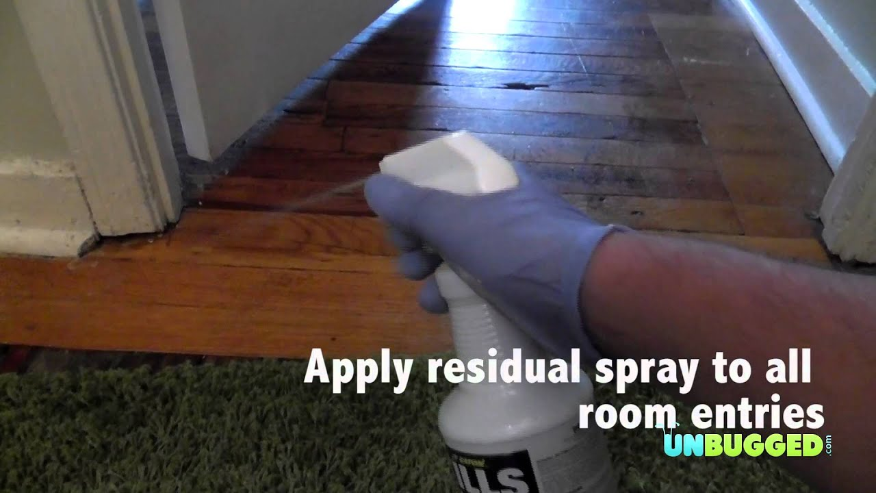 how to stop bed bugs   apply residual spray - youtube