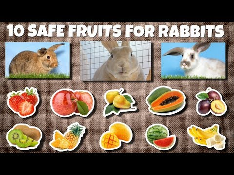 10 Safe Fruits For Rabbits To Eat As Treats