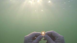 Подводный коп. БЛЕСК ЗОЛОТА ПО УТРУ /HD