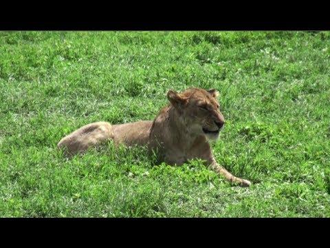 Safari in Kenya and Tanzania