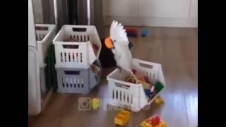 Попугай хулиганит😁😁😁