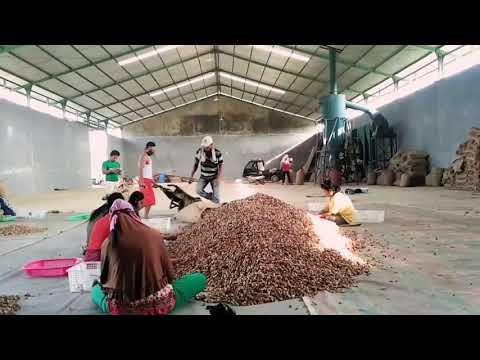 Harga biji pinang 2018 akan mencapai 25000Rb perkilo