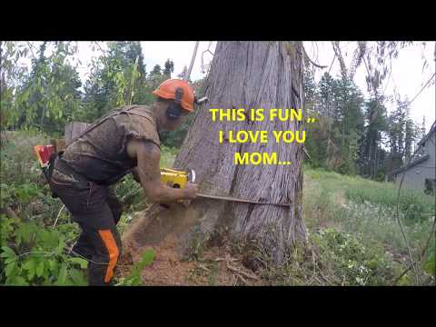 CUTTING DOWN A HUGE DEAD CEDAR TREE