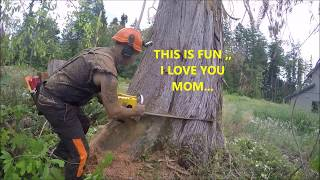 CUTTING DOWN A HUGE DEAD CEDAR TREE