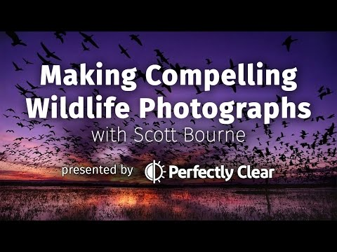Making Compelling Wildlife  Photographs with Scott Bourne