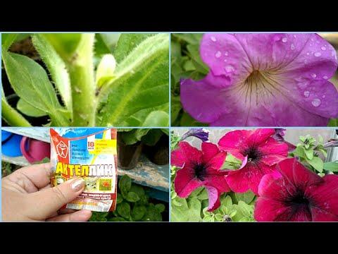 Вопрос: Можно смыть тлю с цветов водой?