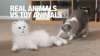Attack of the Clones! Real Animals vs Toy Animals