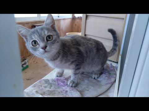 Взорвал интернет! Кот говорит Я тебя ЛЮБЛЮ. Разговаривает - самое милое видео! Жрать мама МАаа МАааа