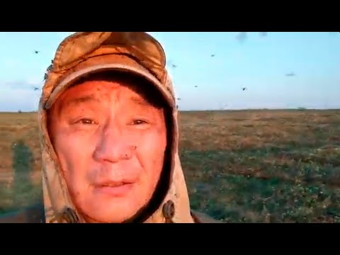 Россияне жалуются на нашествие кровожадных комаров