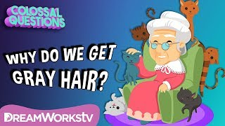 Why Does Your Hair Turn Gray? | COLOSSAL QUESTIONS