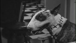 Франкенвини / Frankenweenie (1984)