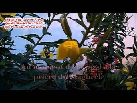 CNN: Adhan miracle, fleurs épanouies en entendant l'adhan ...