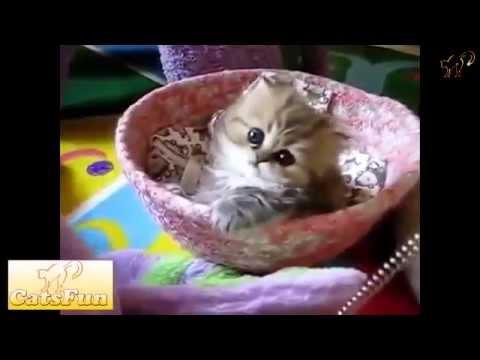 Смешные котята / Милашки! :З