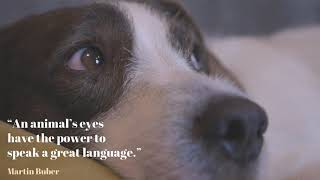 An animal's eyes have the power to speak